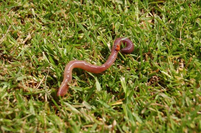 worm-2934958_1280